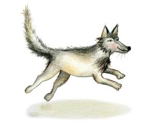 Wolf met schaduw